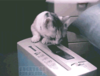 post-9218-Paper-shredding-cat-gif-LXwV